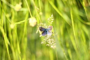 närbild av en fjäril
