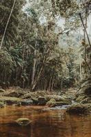 vattenmassa omgiven av träd foto