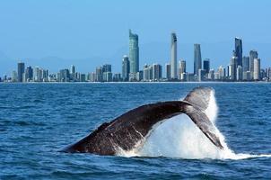 valskådning i guldkusten Australien foto