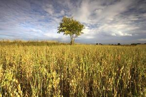 ensamt träd. foto