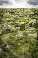 stenar och mossa