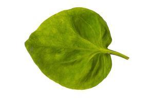 grönt blad på vit bakgrund