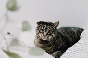 brun strimmig katt på sängkläder