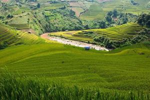 risfält på berget vid mu can chai, vietnam
