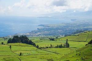 landskap med kor, Sao Miguel, Azorerna, Portugal