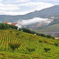 vingårdar