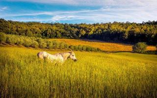 vild häst på jordbruksmark
