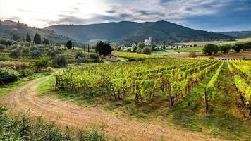 vacker solnedgång över en vingård i Toscana