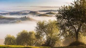 olivträd i kullarna i Toscana.