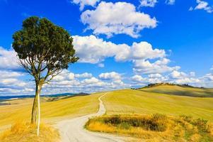 Toscana, ensamt träd och lantlig väg. Siena, Orcia Valley, Italien.
