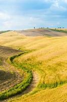 fält och fred i den varma solen i Toscana, Italien