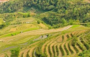 ris terrasserade i norra Vietnam foto