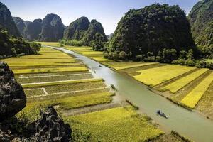 risfält och flod i tamcoc, ninhbinh, vietnam