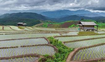 grönt terrasserat risfält