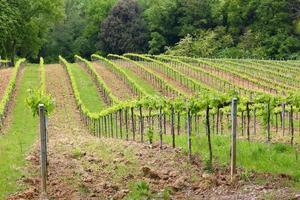 Toscana vingård