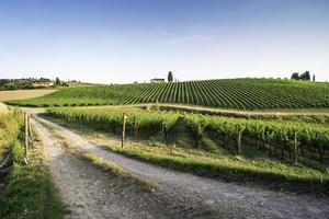 vingårdar i Toscana
