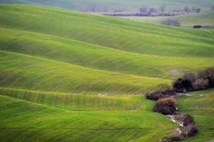 gyllene kullar