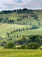 krökt väg i Toscana