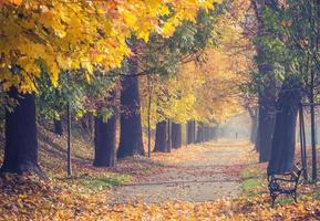 färgrik trädgränd i höstparken, krakow, polen