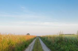 landskap med landsvägen på sommaren