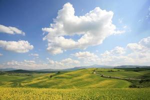 gul äng i Val d'orcia Toscana, Italien