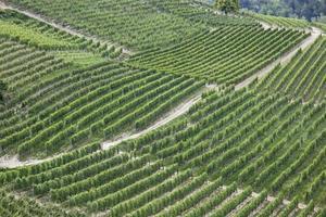 vingårdar i Italien