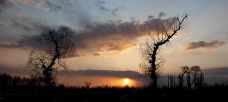 träd vid solnedgången