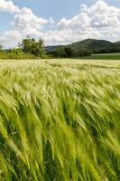 spannmålsfält
