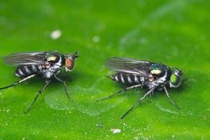 flugor på grönt blad foto