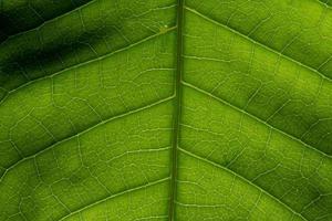makro bakgrund bladmönster