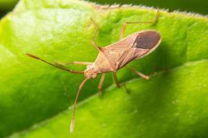 insekt på ett grönt blad, makro foto