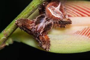 makro spindel på ett blad