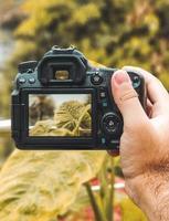 person som tar foto av en växt