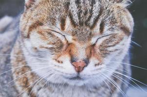 närbild foto av brun och vit katt