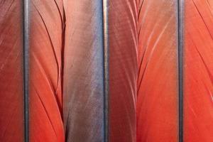 färgglada fjädermönster