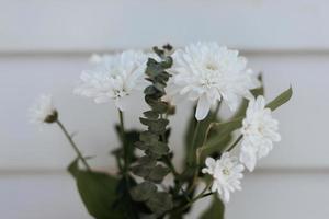vit petaled blomma närbild