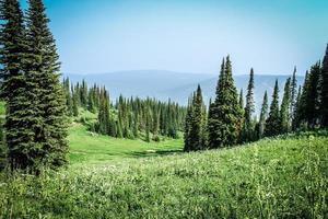 gräsbevuxen åker med träd