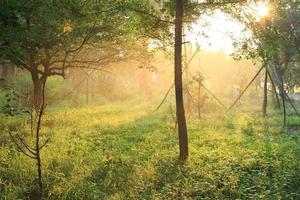 morgon solljus