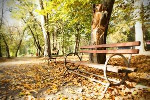 träbänk i höst park foto
