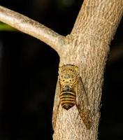 cikada på träd foto