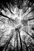 höstens trädtoppar