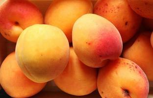 närbild av aprikoser foto