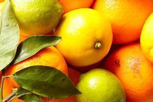 olika citrusfrukter foto
