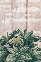 gröna blad på brun betongvägg
