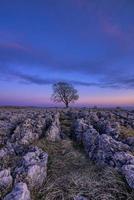 enda träd under solnedgången