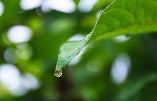 regndroppe på grönt blad foto