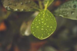 växt med droppar