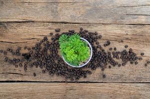 växtkruka och kaffebönor på träbord foto