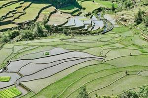 risfält terrass fält Filippinerna foto