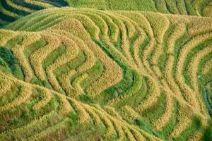 ris terrasserade fält wengjia longji longsheng hunan porslin foto